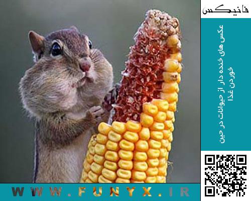 عکس های خنده دار از حیوانات در حین خوردن غذا