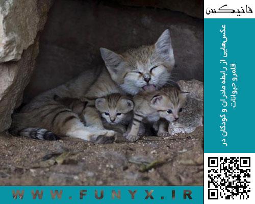 عکسهایی از رابطه مادران و کودکان در قلمرو حیوانات