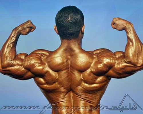 نکات مهم در عضله سازی مردان لاغر اندام در بدنسازی