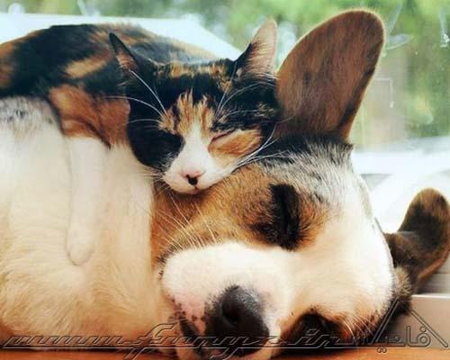 تصاویری دیدنی از نقش دوستی در قلمرو حیوانات