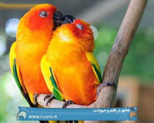 عشق در قلمرو حیوانات